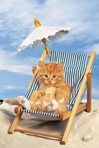 KittenAtbeach