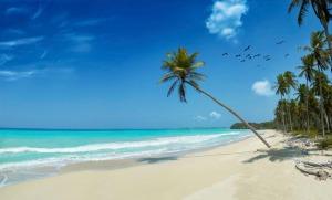 35983251-tropical-beach